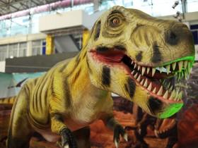 和小姐妹一起参观恐龙展